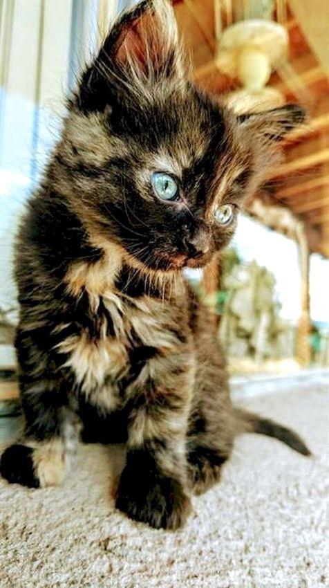 Pin Von Leni Postels Auf Susse Tiere Susse Tiere Katzenbabys Katzen