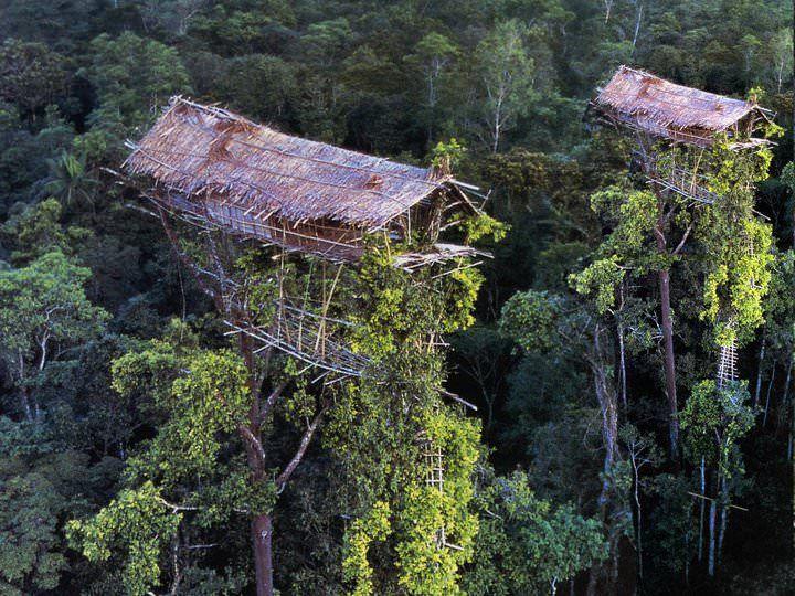 Sejarah    Ilustrasi rumah pohon Suku Kurowai    Sejarah rumah pohon pertama kali ditemukan di Indonesia  tahun 1973, yaitu di perkampungan...