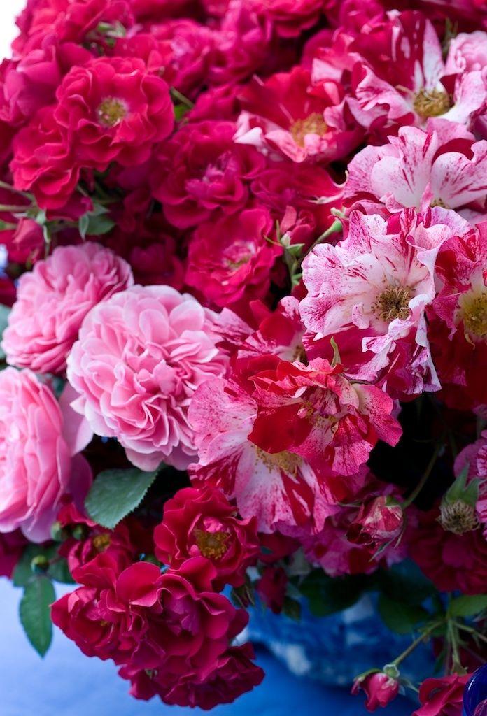 Flowers The Gallery Ii Carolyne Roehm Red Rosespink