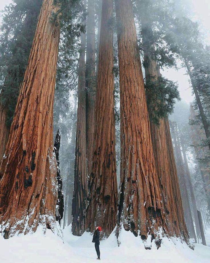 Национальный парк Секвойя, Калифорния
