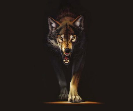Dark wolf wallpaper wolf in the dark wallpapers to your - Phone animal wallpapers ...
