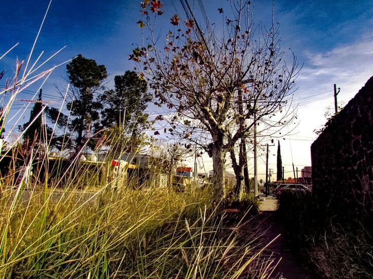 El árbol que perdura sin importar los tiempo de cambio que se viven en aquella extraña ciudad