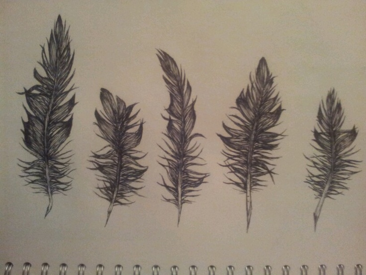 Feathers by amelia jardine 2012