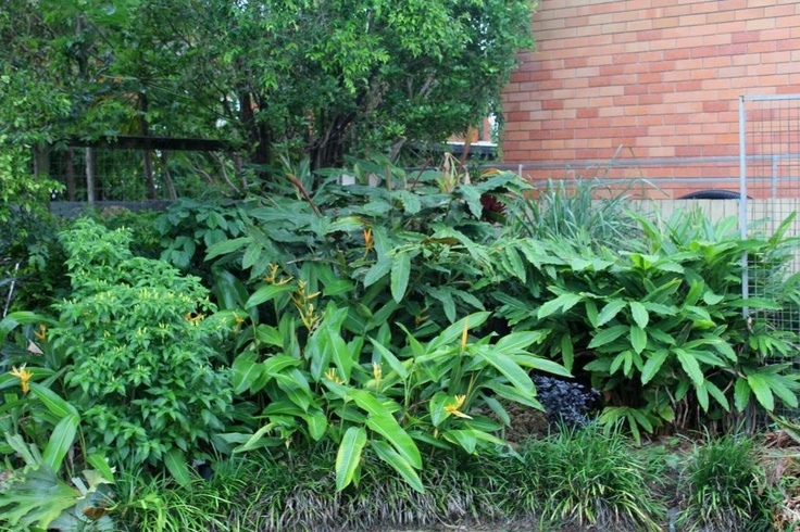 This section of my garden is developing very well, it has a very tropical feel.