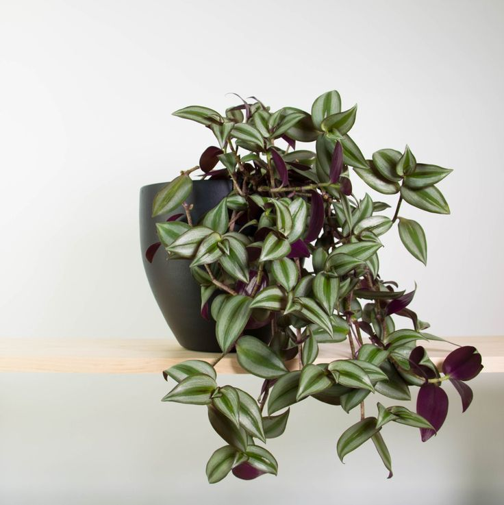 82 best cool indoor plants images on pinterest cool for Indoor flowers and plants