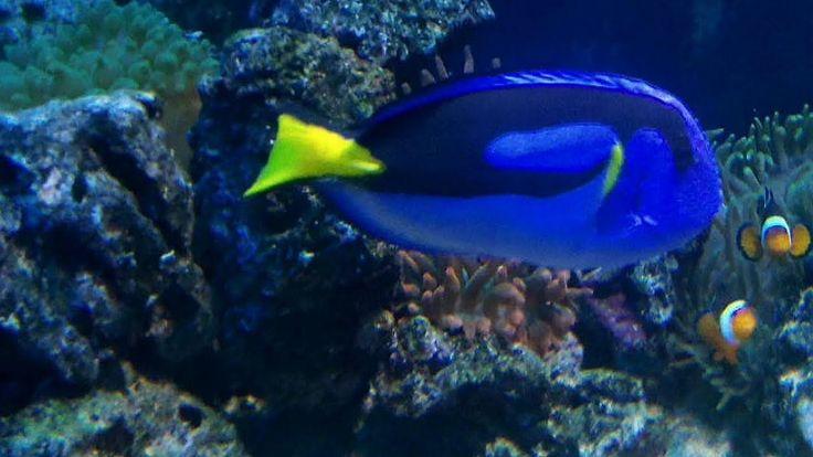 BEAUTIFUL FISH.Śliczna rafa koralowa i kolorowe rybki w Akwarium Gdyńskim.