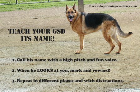 Best German Shepherd Names to Catch your Dog's Attention
