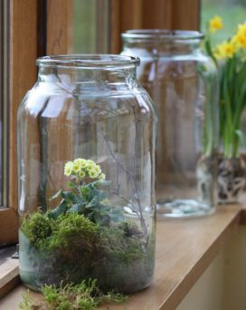 Hungarian pickle jar terrarium. ..ideas now that I own 9 of them.. ;)
