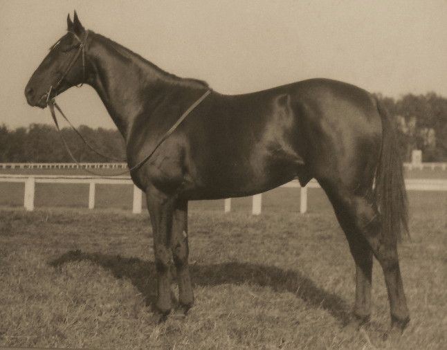 BATTLESHIP 1927, Son of Man o' War - Quarantine. 55 starts, 24 wins, 10 placings. The only horse to win both the Grand National in 1938 and the American Grand National in 1934. Entered the US Racing Hall of Fame in 1969. Small in stature at only 15.1hh, he began racing on the flat and changed to the jumps in 1933. Retired to stud in the US after the Grand National in 1938, he sired only 58 foals. He died in 1958 aged 31. Hall of Fame 1969
