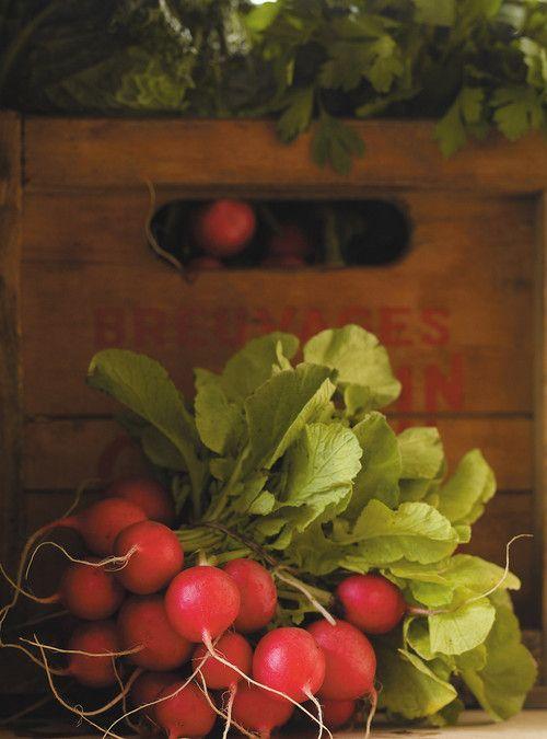 Salade fraîche d'automne aux radis, aux pommes et au navet blanc