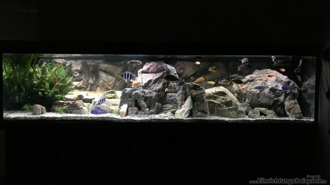 die besten 25 malawi aquarium ideen auf pinterest cichlid aquarium malawi cichlids und. Black Bedroom Furniture Sets. Home Design Ideas