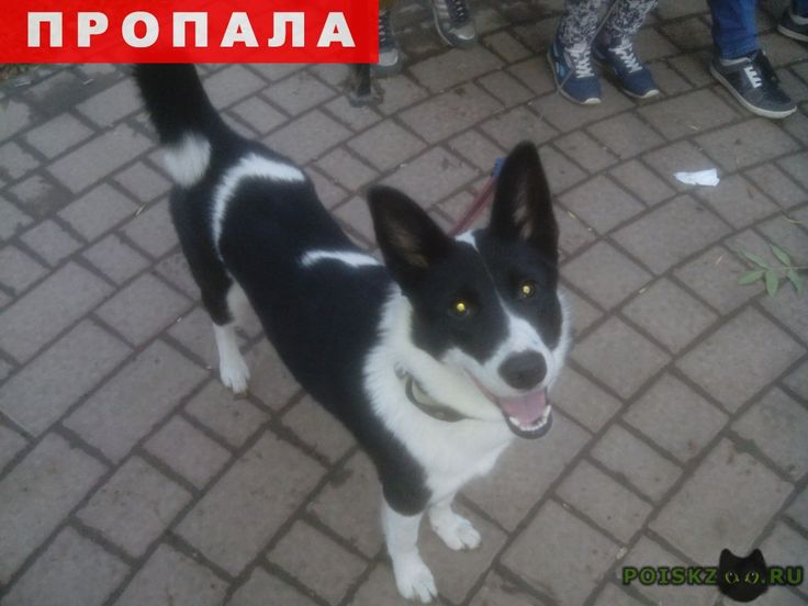 Пропала собака г.Шилово http://poiskzoo.ru/board/read30749.html  POISKZOO.RU/30749 Ребят пожалуйста помогите с поиском собаки потерялась в районе села или деревни Ерахтур Шиловского района если не ошибаюсь. Произошла большая ошибка когда мой папа около года назад отдал собаку так как в квартире она жить не могла, сначало всё было нормально, но вчера я решила съездить и проведать её и как оказалось что её там нет она убежала. Видели её в селе Ерахтур ещё в августе, кто то говорит что видел её…