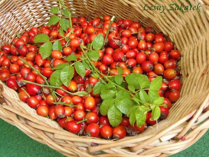 Owoce dzikiej róży i sposoby ich wykorzystania