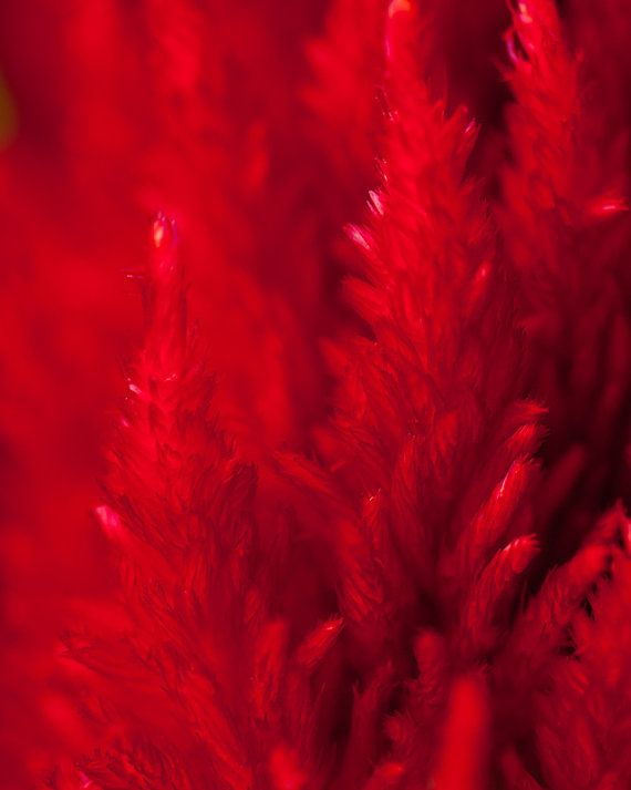This is a beautiful flower macro, but it also looks like red pine trees.