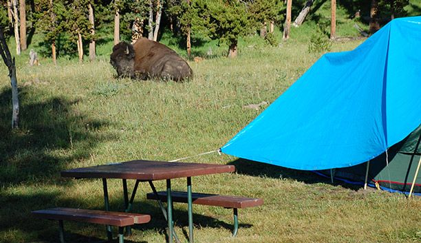 All about Yellowstone campgrounds, reservations, camping rules, campgrounds for bicyclists and hikers, and group camping in the National Park.
