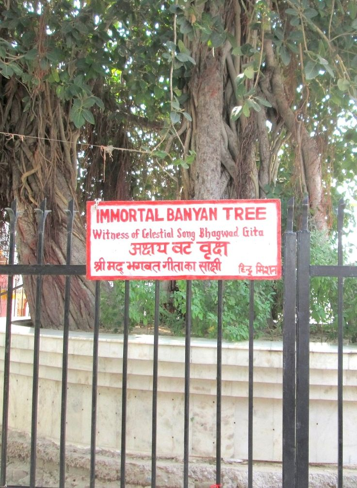 Immortal Banyan Tree. According to historical sources it is believed that the tree is present from the time of Bhagavad Gita.