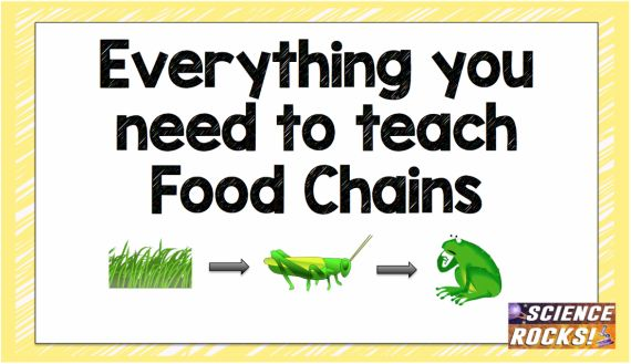 Everything you need to teach food chains from Science Rocks