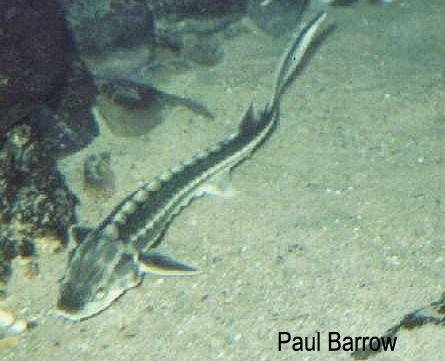 Google Image Result For Uk Fish