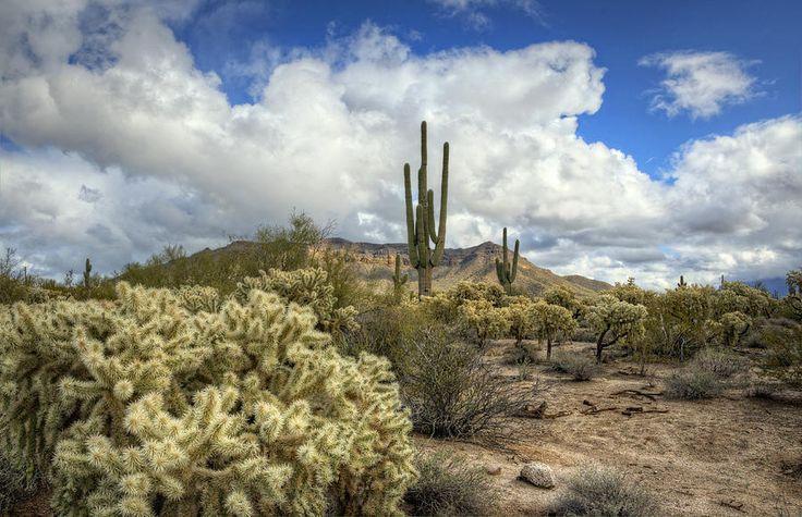 desert southwest pictures | The Desert Southwest Photograph