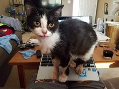 A feral cat was found gravely ill wandering the streets in Flint, Michigan. A couple learned about her plight via Facebook, and knew they had to save her.Meet Panda Bear! Cassandra ClaxtonEarly this March, Cassandra Claxton and her boyfriend, Blake, saw a post about a sickly feral c...