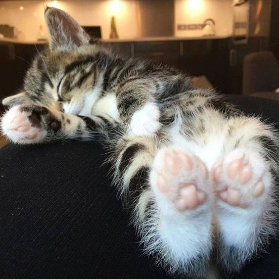 Time to sleep… Click the photo If you'd like to see more cute cat photos #catloverscommunity – FAOLAN