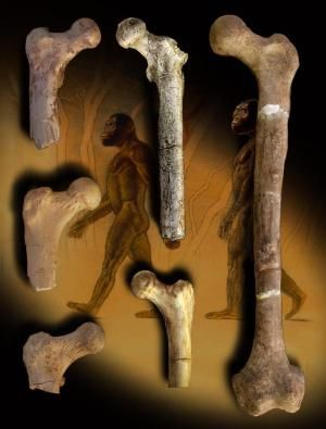 Early tree-dwelling bipedal human ancestor was similar to ancient apes and 'Lucy' but not living apes