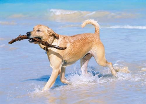 Great article on the importance of pet health!: Dogs Shampoos, Labrador Retriever, Pet Dogs, Dogs Stuff, Texas Vacations, Families Pet, Pet Health, Fun Games, Furry Friends
