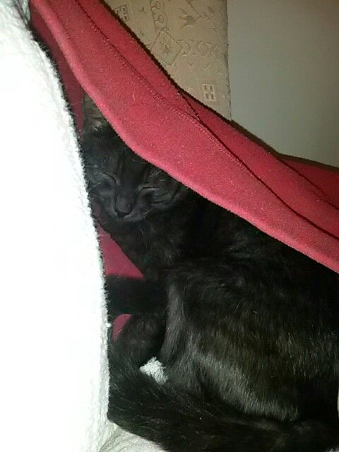 Under covet kitty