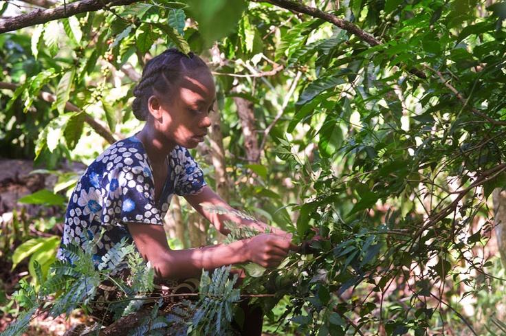 Vivez la Nature, entre Ecologie et Développement Durable. G.Planchenault
