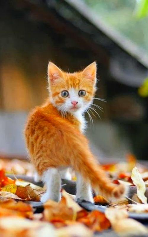 Pour ADOPTER des chatons à Bordeaux, à l'Ecole du Chat Libre, cliquer 2X… …