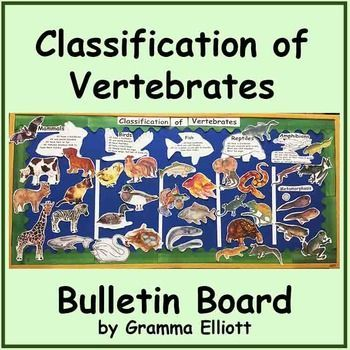 Classification of Vertebrates Bulletin Board Kit or Sorting Activity Includes ready to print images:IMAGES of vertebrates in color and black line art:Bat, Camel, Whale, Fox, Carp, Trout, Goldfish, Fancy fish, Chicken, Owl, Swan, Goose, Colt, Sheep, Puppy, Mouse, Frog, Cat, Dog, Rooster, Gecko, Newt, Salamander, Wall Gecko, Giraffe, Ram, Kangaroo, Loon, Cuckoo, Wood Duck, Nest, Pig, Cow, Zebra, Goat, Turtle, Snake, Eel, Crow, Alligator, Crocodile, Frilled Lizard, ChameleonTITLES and lists of…