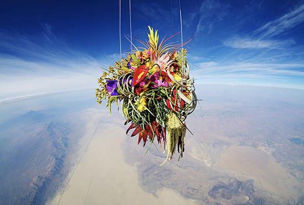 Botânico fotografa flores enviadas ao espaço
