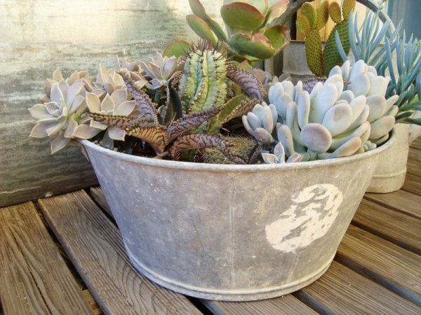 Une bassine en zinc pour succulentes et cactées