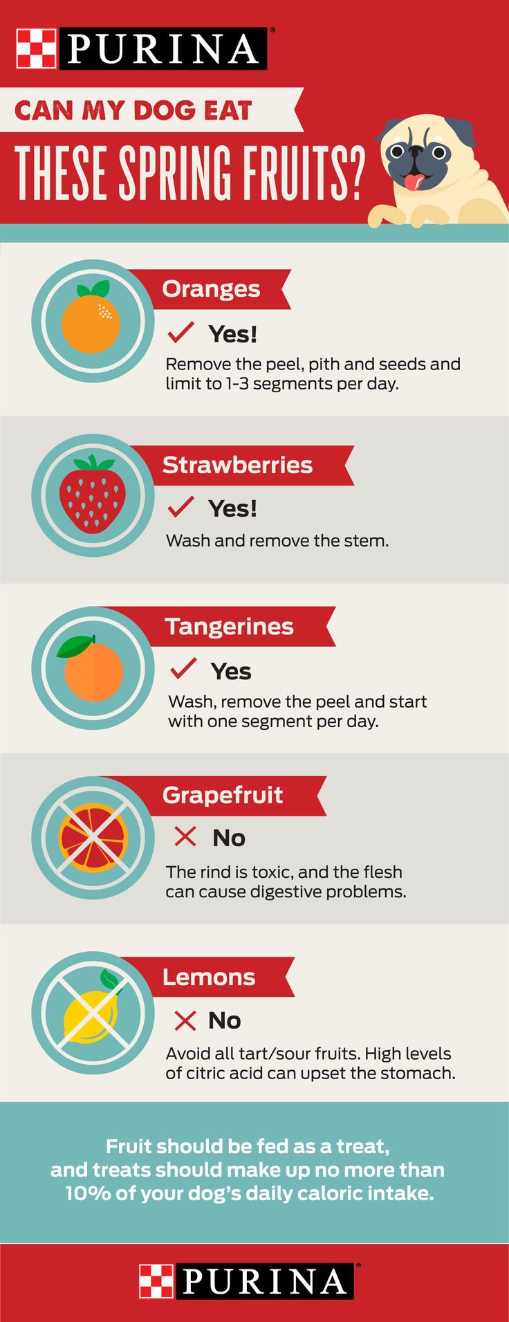 "Can my dog eat fruits and berries? Purina's expert nutritionist shares safety tips on feeding popular spring fruits to pets. ""Strawberries are good for dogs. But feed them to your dog like you would any other snack. Treats should make up no more than 10% of his total calories for the day,"" Purina Nutritionist, Jan Dempsey says. Use this handy ""pinfographic"" as a guide and visit Purina.com to learn how other fruits like oranges and tangerines can impact your pet's health."