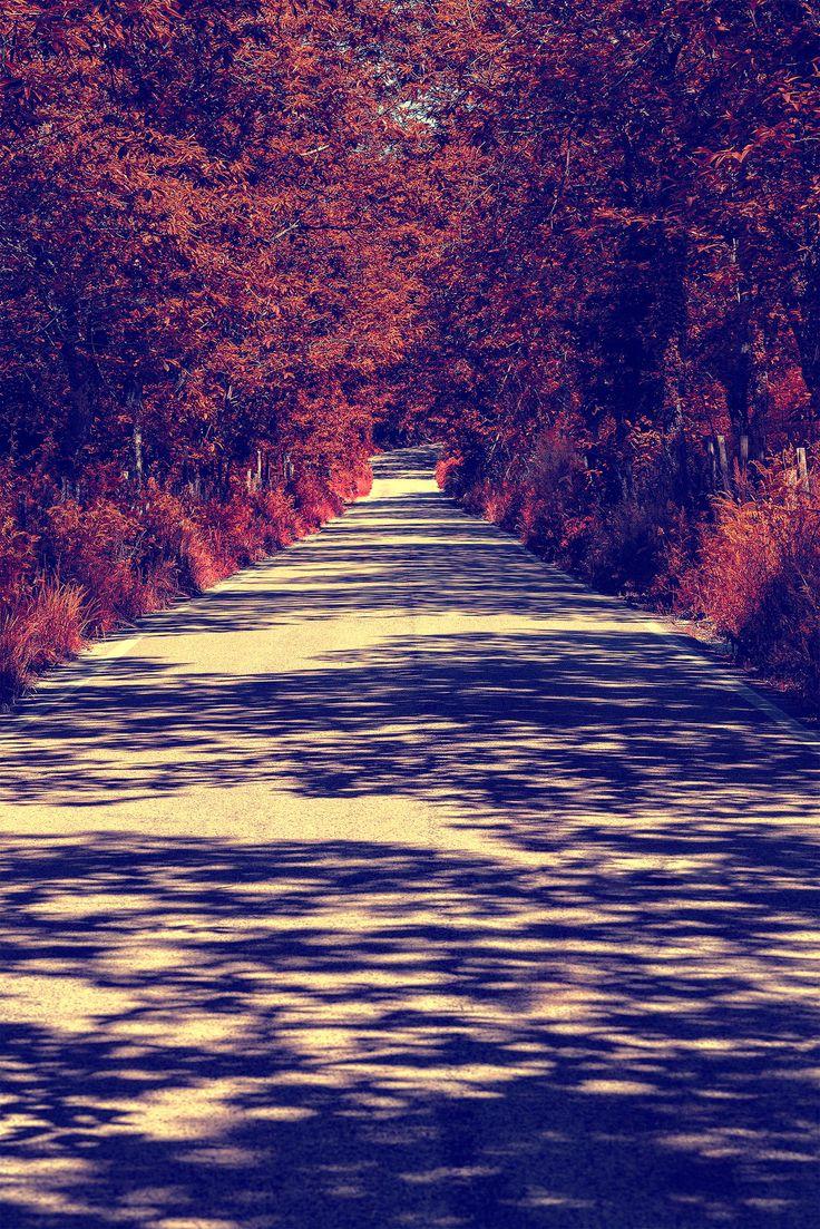 So Autumn... by Giorgio Galano on 500px