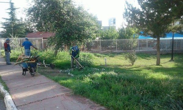 <p>Chihuahua, Chih.- El Gobierno Municipal a través de la Dirección de Mantenimiento Urbano llevó a cabo los trabajos de limpieza en cuatro