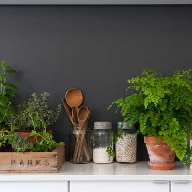 Kitchen Bench Herb Garden: 101 Best Images About Kitchen Herb Garden On Pinterest