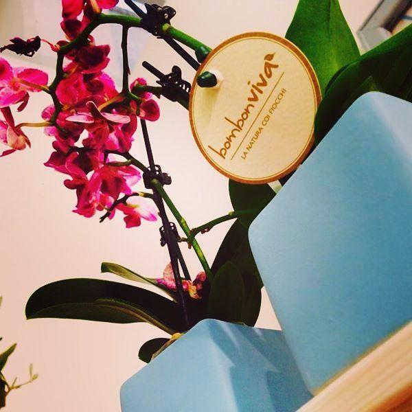 La #lineagreen 🌱di #Bombonviva 💚 è ricca di tanti prodotti: scoprite quello che più vi rispecchia...  delicata, raffinata e colorata  l' ORCHIDEA 🌸 Bomboniera Naturale e solidale