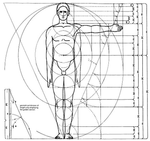 69 best images about human proportions on pinterest
