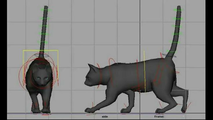 Cat walk-cycle animation. A simple walk-cycle of a cat.  Used Maya for animation.