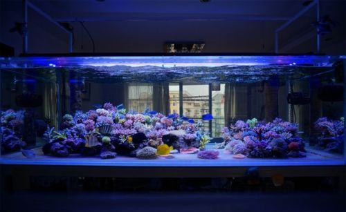 Aquarium Lighting Par