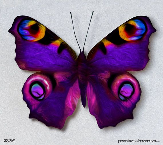 European Princess Colorful Butterfly in  by fineartdesigngallery