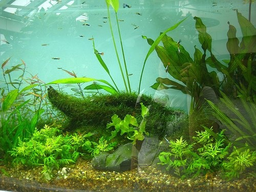 how to add live plants to freshwater aquarium