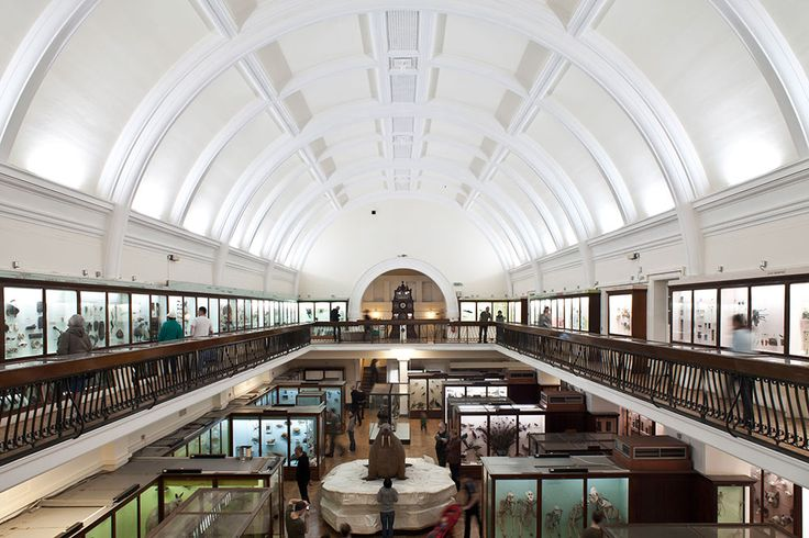 grant museum of zoology - Google Search