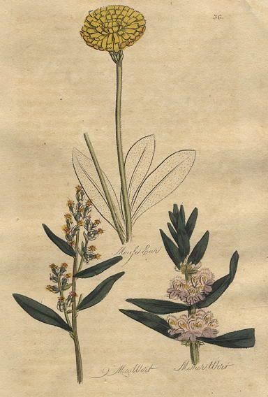 Thornton family herbal