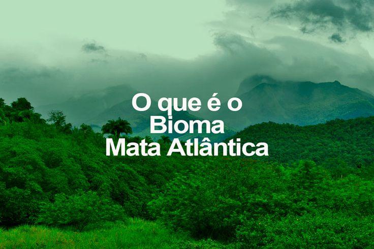 O que é o Bioma Mata Atlântica