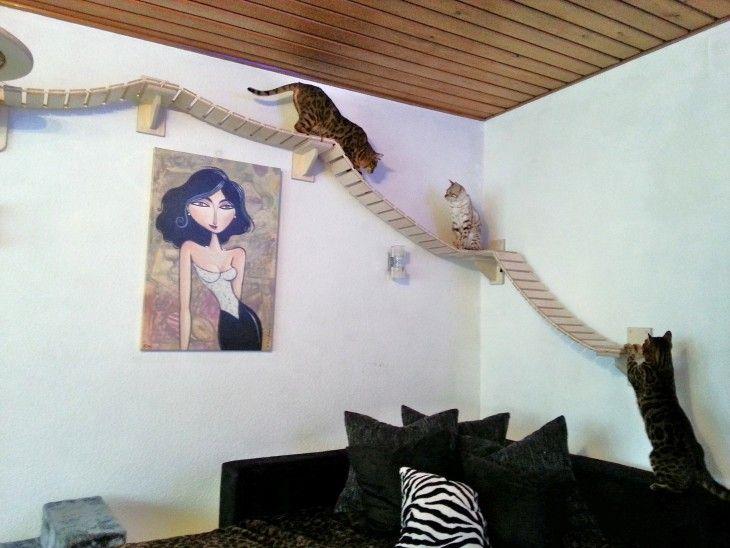 cuarto que tiene puentes colgantes para gatos