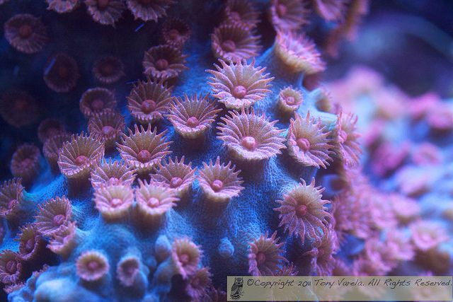 108 Best Images About Coral Reef Madness On Pinterest