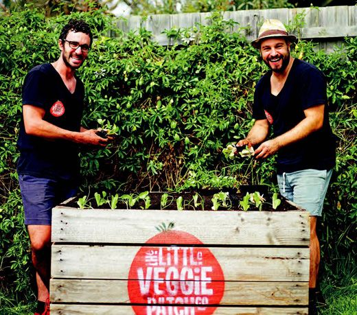 Urban Growth: The Little Veggie Patch Co and their 'Pop Up Patch'