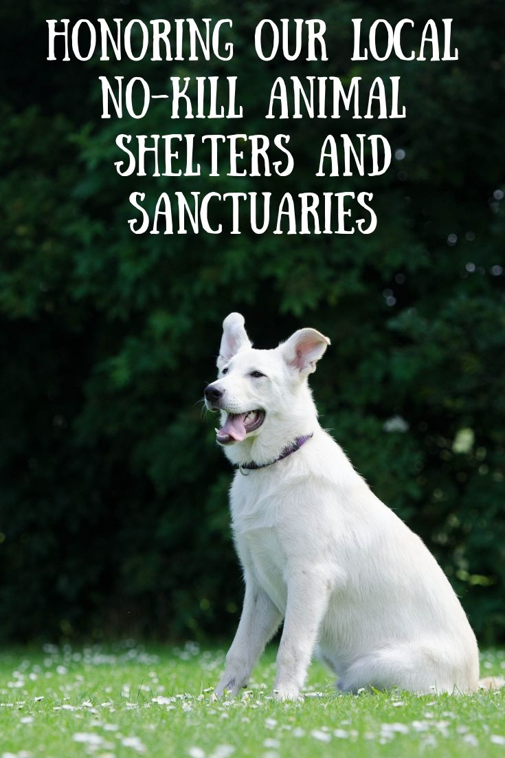 Honoring Our Local No Kill Animal Shelters And Sanctuaries No Kill Animal Shelter Animal Shelter Animals